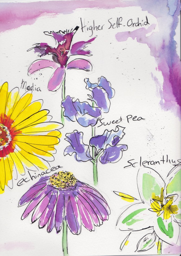Illustratie door Rachelle Middelkoop – http://rachellemiddelkoop.wix.com/portfolio