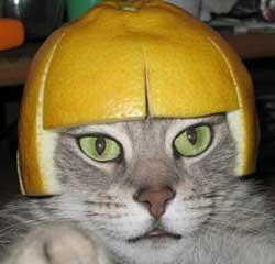 citroen-kat