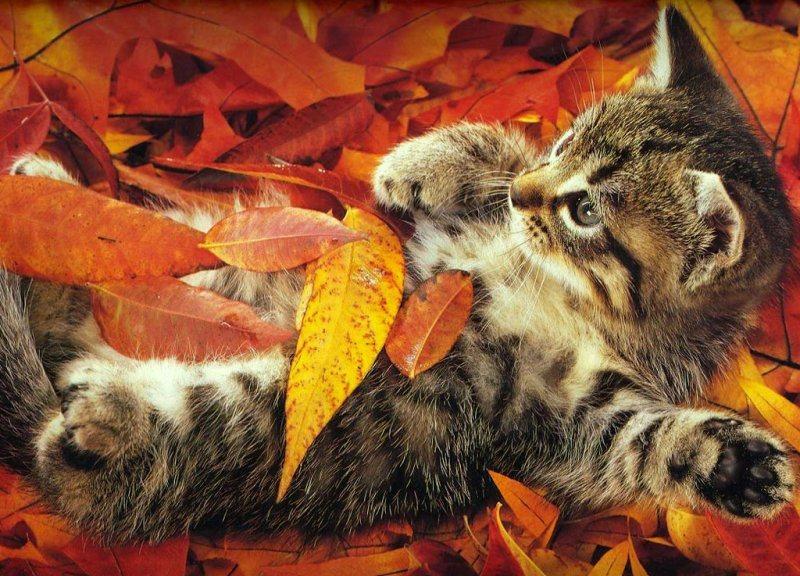 herfst-kitten